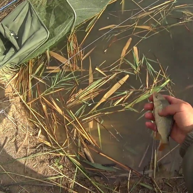 Ловля рыбы на фидер | Дневник рыболова