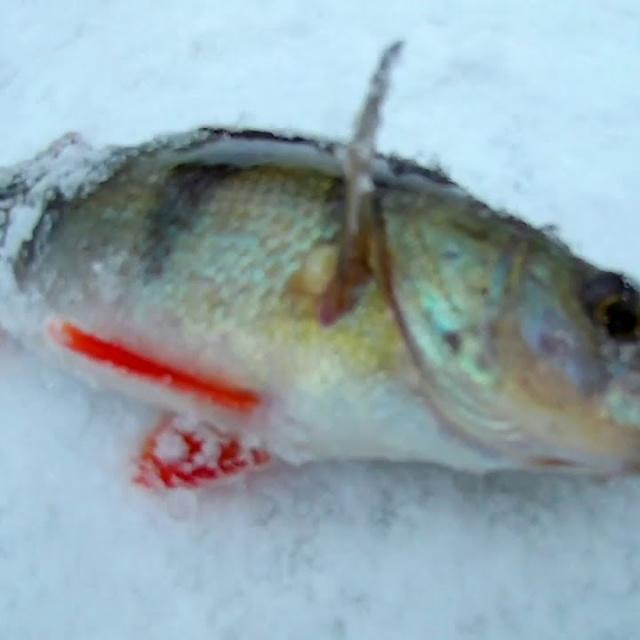 Зимняя рыбалка 2019 | Ловля крупного окуня Удачно попал