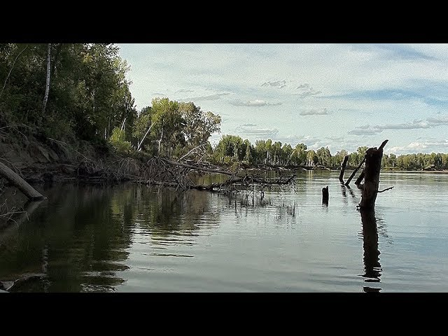 ПОД ЭТОЙ ДРОВИНОЙ ЖИВУТ ОДНИ МОНСТРЫ Трофейная рыбалка Ловля щуки