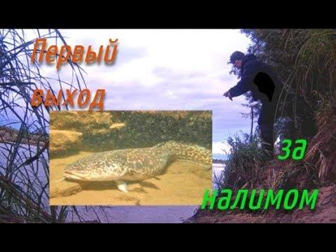 Первый Выход За Налимом Осенняя ловля налима и другой рыбы Болен Рыбалкой №559