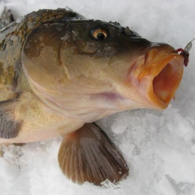 Такой рыбалки, я еще не видел или как нужно правильно рыбаков обуривать.
