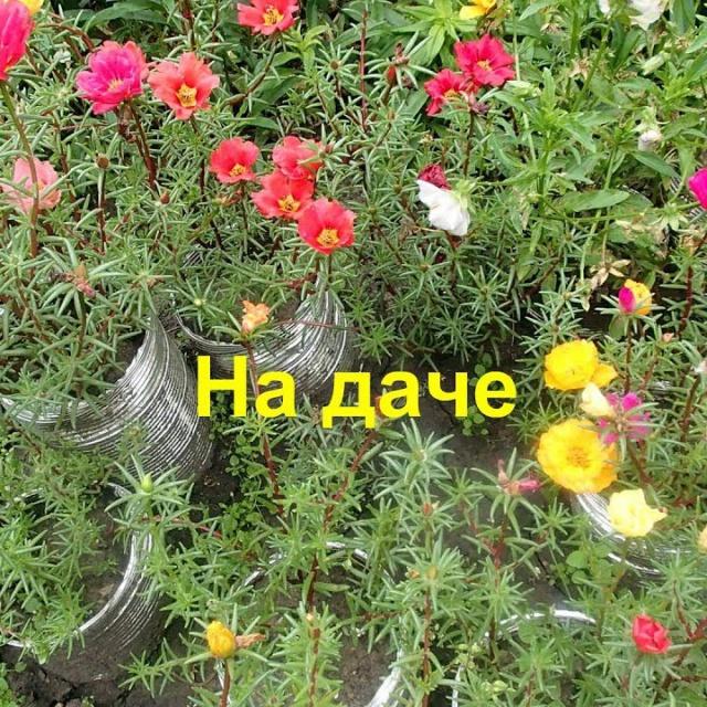 Ольга Уголок -  Дачный обзор в августе.