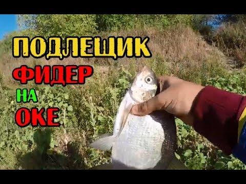 Рыбалка / Ловля подлещика на Оке под Серпуховом.