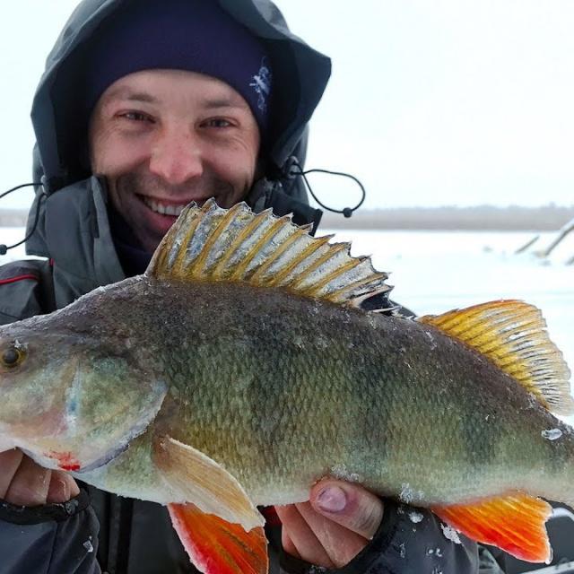 Жирные, толстые, КИЛОГРАММОВЫЕ ОКУНИ! Зимняя рыбалка с ночевкой в комфорте Вот это жор