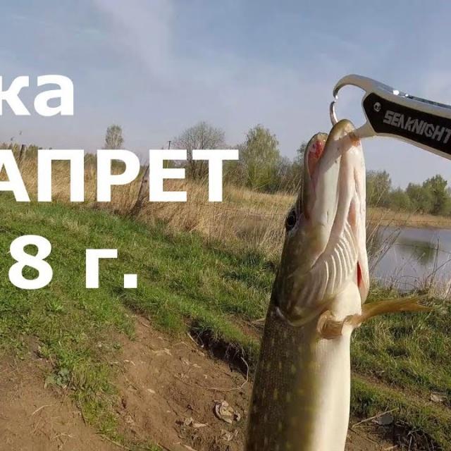 Рыбалка в запрет на щуку Май 2018