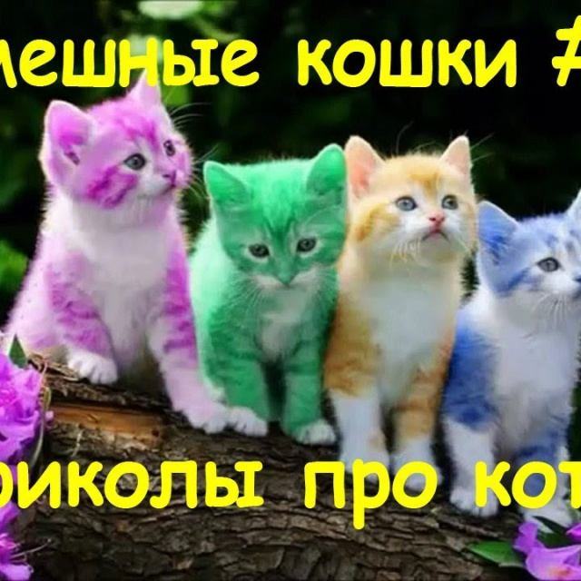 Подборка приколов про котов кошек и котят до слёз смешно#4
