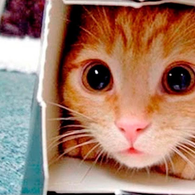 Приколы с Котами - Смешные коты и кошки 2018