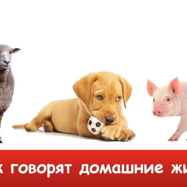 КАК ГОВОРЯТ ЖИВОТНЫЕ? Звуки животных для ДЕТЕЙ. Учим животных для самых маленьких. Домашние животные