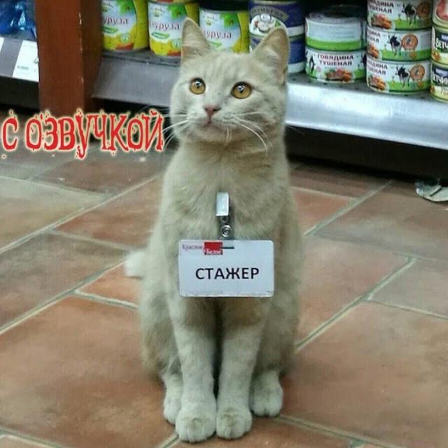 Приколы про котов с Озвучкой смешные коты и кошки 2018 – от Domi Show