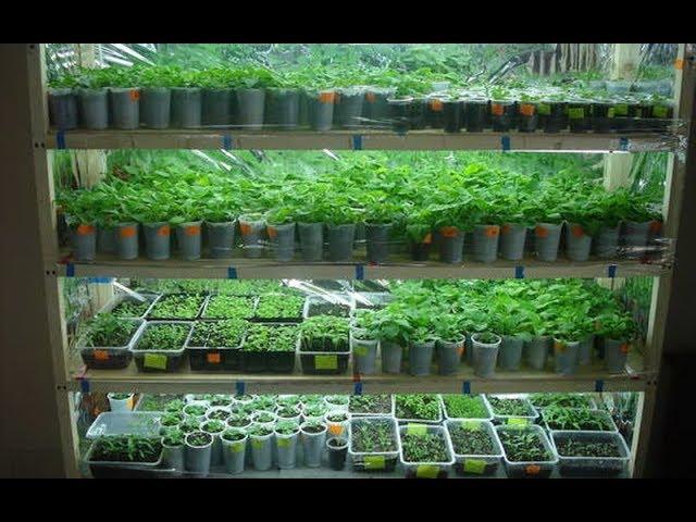 Урожайный Огород |  КАК Я ВЫРАЩИВАЮ РАССАДУ