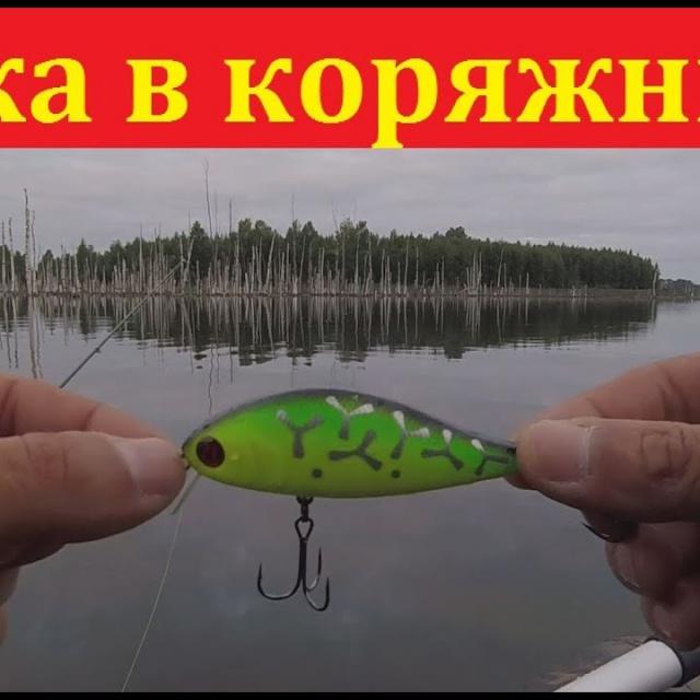 Ловля щуки на воблеры в коряжнике - рыбалка на щуку в конце августа   Простая рыбалка