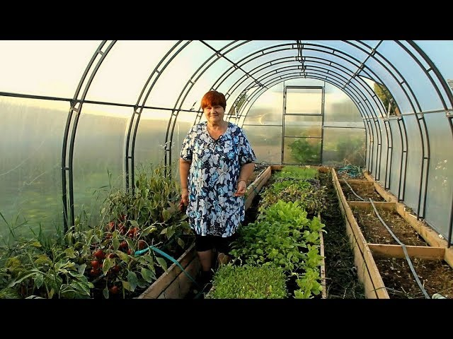 Юлия Миняева Выращивание помидоров и зелени в теплице