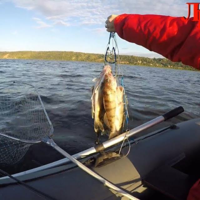Рыбалка на р Волге,ловля берша с лодки на джиг