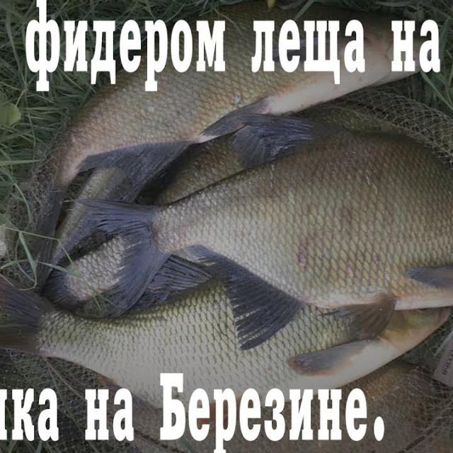 Ловля фидером леща реке Рыбалка на Березине