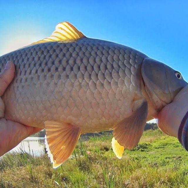 Рыбалка в сентябре. Ловля КАРПА. Осваиваю флэт метод ФИДЕР.