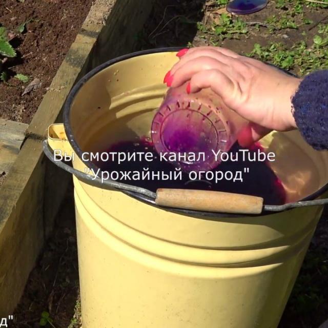 Урожайный огород Подкормите клубнику этим средством весной в 3 раза больше урожай