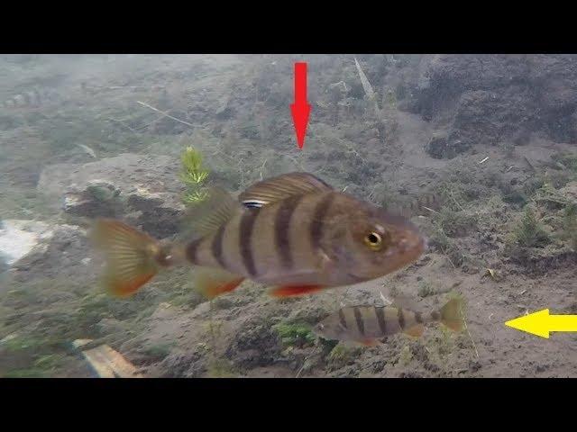 ЗИМНЯЯ ЛОВЛЯ ОКУНЯ подводная сьемка