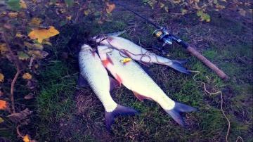 Ловля жереха. Небольшая вечерняя рыбалка. Рыбалка на велосипеде.