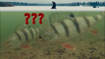 Безмотылка или Мормышка с мотылем Окунь Первая Зимняя Рыбалка 2018
