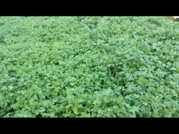 Огород где все растет 106.Плодородную землю делаем с осени