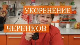 Юлия Минаева -  Как правильно укоренить черенки зимой. Проверенный способ.