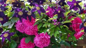 Урожайный огород  Весна пора сажать цветы розы клематисы флоксы лилейники