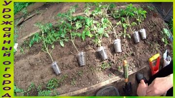 Урожайный огород КИТАЙСКИЙ СПОСОБ!ПРОДОЛЖЕНИЕ!ВЫСАДКА РАССАДЫ В ГРУНТ!