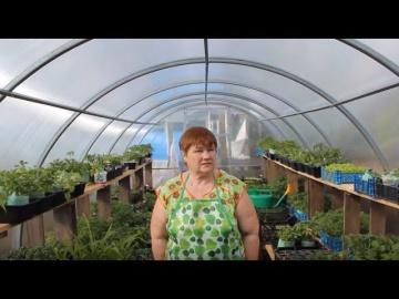 Юлия Миняева Отопление Теплицы Богатый Урожай Вопреки Погоде