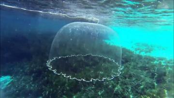 Beautiful fishing cast net | Красивая ловля рыбы сетью