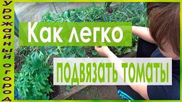 Урожайный огород Удобная подвязка и пасынкование томатов