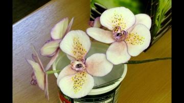 Мастичные орхидеи | Кесслер Светлана