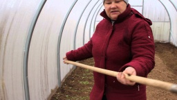 Юлия Минаева -  Результат посадки салата и укропа под зиму.