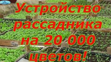 Сад Огород своими руками РАССАДНИК НА 20 000 СТАКАНОВ - КАК ЭТО РАБОТАЕТ?