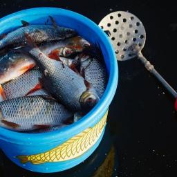 Экшн рыбалка, необычно ранний первый октябрьский лед. Окунь, плотва. [salapinru]