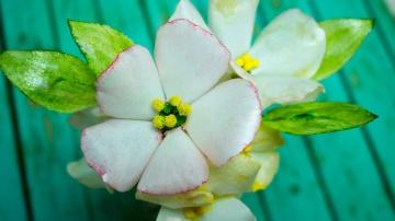 Я ТОРТодел Вафельные цветы