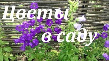Огород где все растет 262. Цветы, которые посажу и которые не посажу