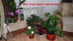 Ольга Уголок -  Моя рассада, которую высевала 6 и 7 февраля.