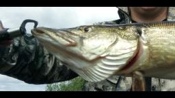 Случайный трофей в бесклёвье - Крупная щука на джиг | Простая рыбалка