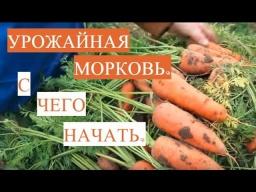 Юлия Минаева - Как Подготовить Семена Моркови к Посадке
