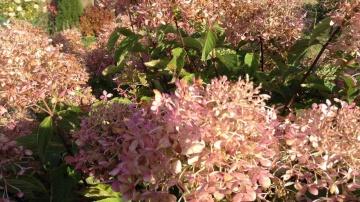 Огород где все растет 249. Как подготовить цветы к зиме