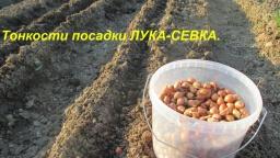 Юлия Минаева -  Тонкости посадки лука-севка.