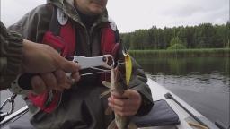 Клёв щуки и окуня 16 июля 2017 года - Десногорское водохранилище | Простая рыбалка
