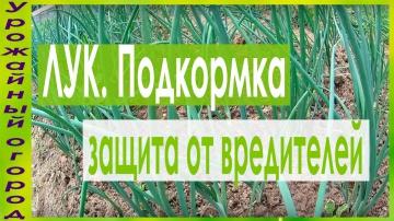 Урожайный огород СУПЕР СРЕДСТВО ДЛЯ ПОДКОРМКИ И ЗАЩИТЫ ЛУКА ОТ ЛУКОВОЙ МУХИ!!!