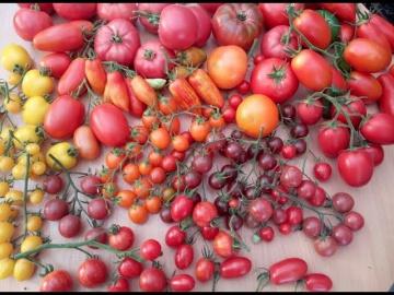 Юлия Миняева посадка томатов на рассаду Урожай Выше Всяких Похвал