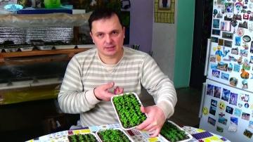 Сад Огород своими руками ПЕТУНИЯ ЧЕРЕЗ 25 ДНЕЙ ПОСЛЕ ПОСЕВА - как вырастить петунию самому!