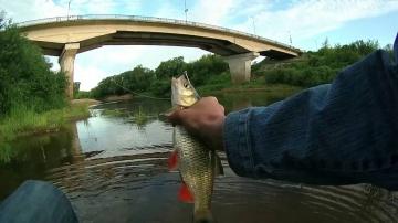 Один голавлик - отчёт с последней рыбалки