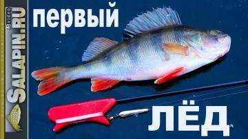 Зимняя рыбалка первый лед 2017-2018 окунь на блесну salapin ru