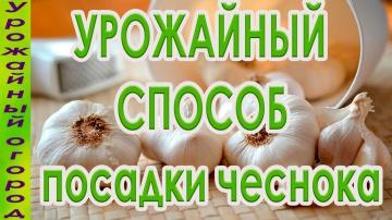 Урожайный огород СУПЕР УРОЖАЙНЫЙ СПОСОБ ПОСАДКИ ЧЕСНОКА!