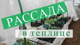 Юлия Минаева -  Рассада в теплице. Правильный переезд без потерь.
