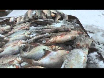 Зимняя рыбалка на карася на маныче